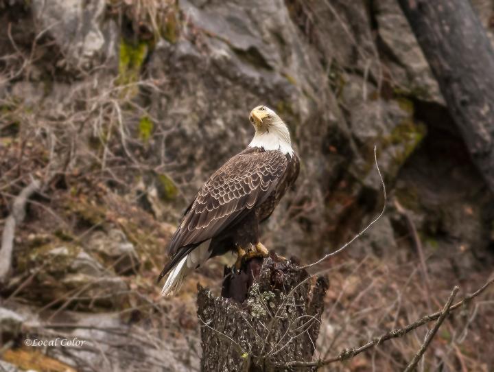 20160311-eagle-web.jpg