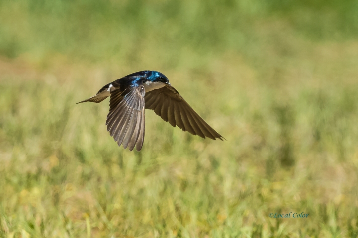 20160701-7-1-swallow2-web
