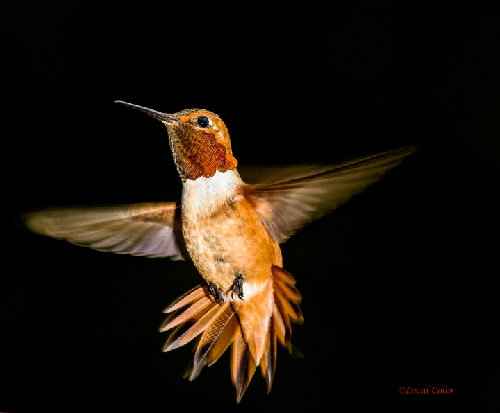 20160710-june-rufous-web