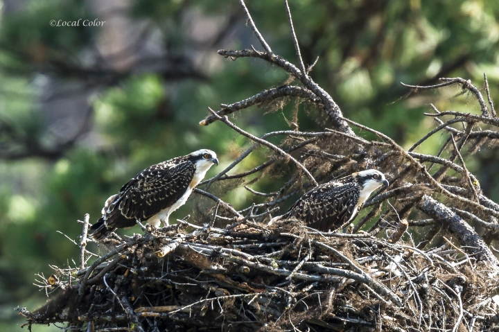 20160808-2chicks-web.jpg